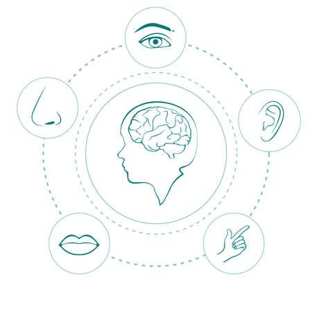 olfato: vector cinco sentidos iconos, nariz humana, oídos, ojos y boca ilustración