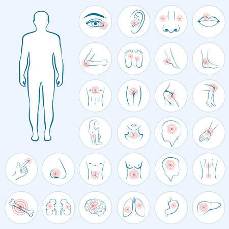 벡터 인체 해부학, 신체 통증, 의료 그림