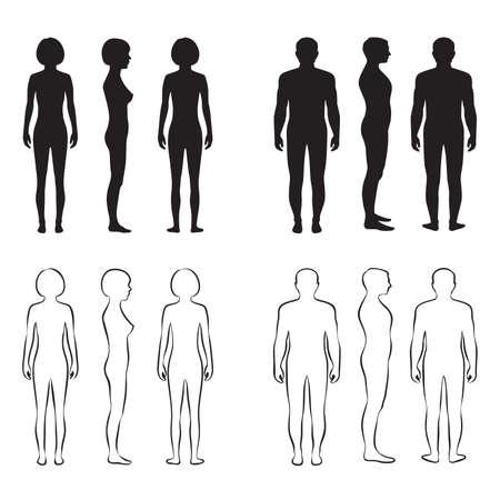 mujer desnuda de espalda: anatom�a del cuerpo humano, hombre vector frontal, silueta de la mujer Vectores