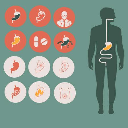 dolor de estomago: anatomía del estómago humano, vector sistema digestivo, ilustración salud