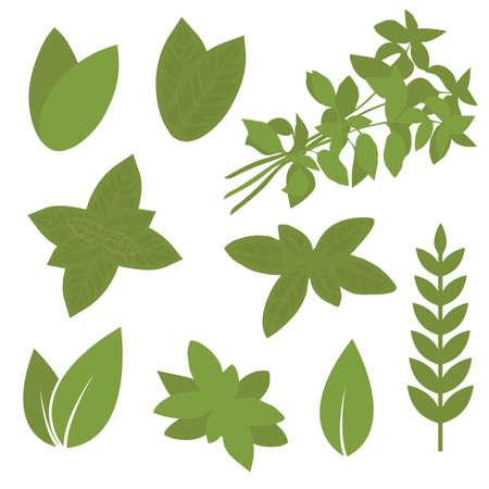 isolated herb leaf, plant illustration, bay, sage, melissa