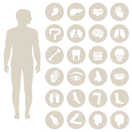 anatomy human body parts, organs vector medical icon, Çizim