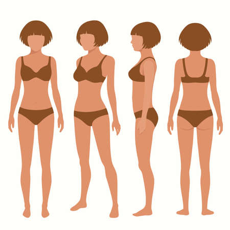 mujeres desnudas: la anatomía del cuerpo humano, frontal, posterior, vista lateral vectorial Ilustración de la mujer