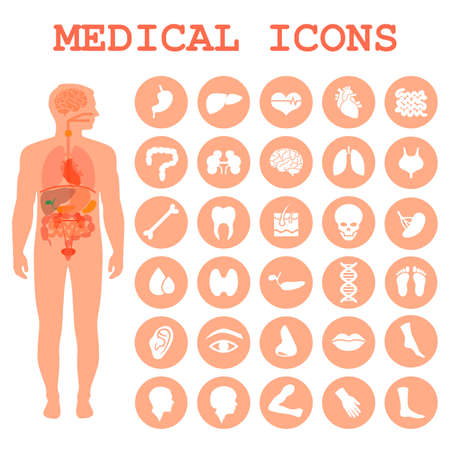 medical infographic icons, human organs, body anatomy Vettoriali