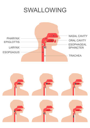 digestive disorder: swallowing process, nose throat anatomy, medical illustration Illustration