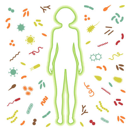 human immune system: immune system protection. bacteria, virus infection