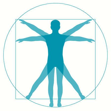 uomo vitruviano: Vetruvian uomo di Leonardo da Vinci, anatomia umana Vettoriali