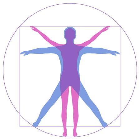 Leonardo Da Vinci Vetruvian Man, menselijke anatomie Stock Illustratie