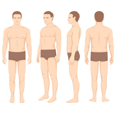 human body anatomy, vector man front back side Vettoriali