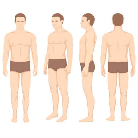 Anatomia del corpo umano, lato vettoriale frontale dell'uomo Archivio Fotografico - 86148921