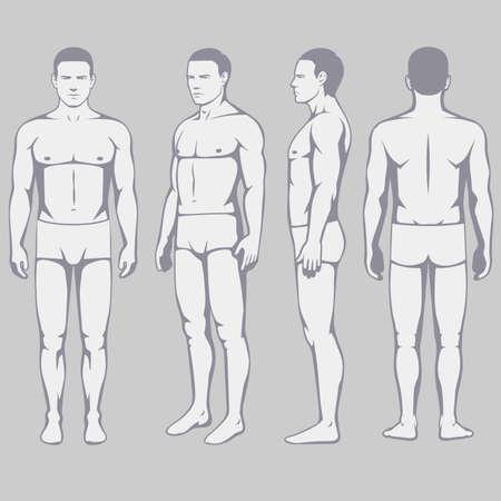 Anatomia del corpo umano, lato vettoriale frontale dell'uomo Archivio Fotografico - 86148922