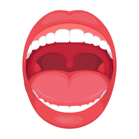 Illustration of a human open mouth anatomy, medical diagram illustration.