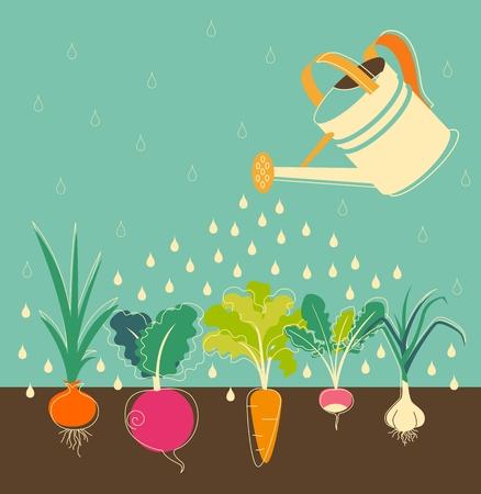 lluvia: Jardín concepto de riego con verduras de raíz