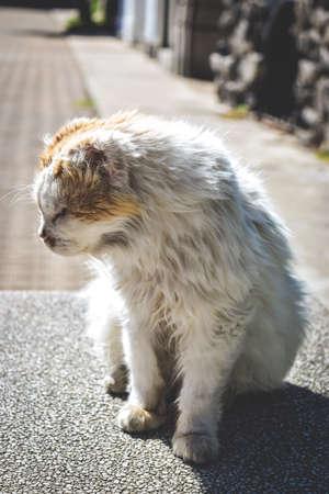 oneself: Cat sunbathing Stock Photo