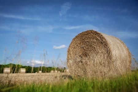 Harvested field with straw bales against bule sky in summer
