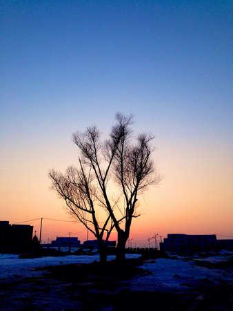 일몰 외로운 나무