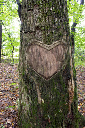 bark carving: pink heart on tree bark,  Heart wooden cut texture
