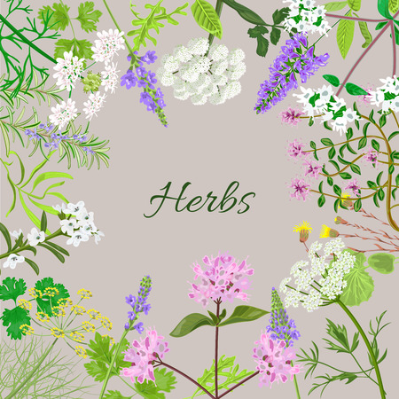 marjoram: Vector card with herbal flowers. Salvia, angelica, oregano, rosemary, savory, verbena, anise, fennel, coltsfoot, marjoram flowers. Vector illustration.