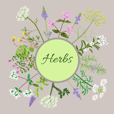Vector card with herbs and plants. Vintage circle with herbal flowers illustration.