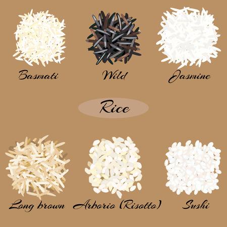 Verschillende soorten rijst Basmati, wild, jasmijn, lang bruin, arborio, sushi. Vectorillustratie EPS-10. Vector Illustratie