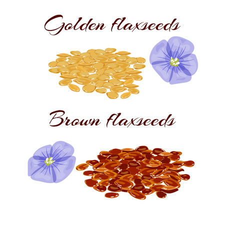 common flax: Golden and brown flaxseeds  or linseeds. Close up view. Vector illustration.