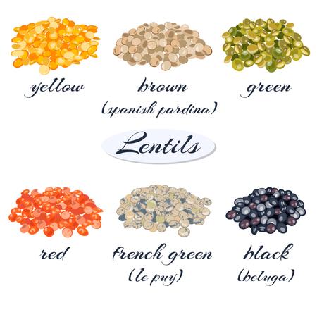 Verschillende soorten linzen. Geel, bruin, groen, rood, frans groen, zwart linzen. Vector illustratie.