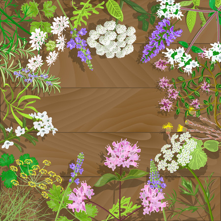 savory: Circle of flowering herbs on wooden background.Salvia, angelica, oregano, rosemary, savory, verbena, anise, fennel, coltsfoot, marjoram flowers. Vector illustration.