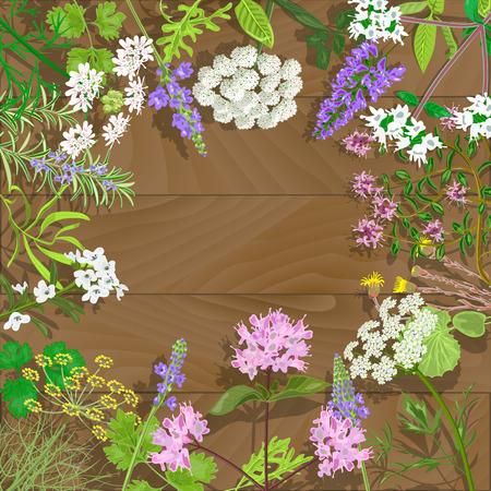 marjoram: Circle of flowering herbs on wooden background.Salvia, angelica, oregano, rosemary, savory, verbena, anise, fennel, coltsfoot, marjoram flowers. Vector illustration.