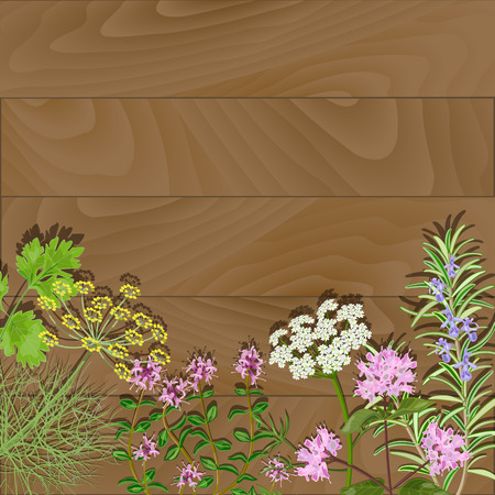 Flowering herbs on wooden backgroud. Thyme, rosemary, anise, fennel, oregano flowers. Vector illustration.