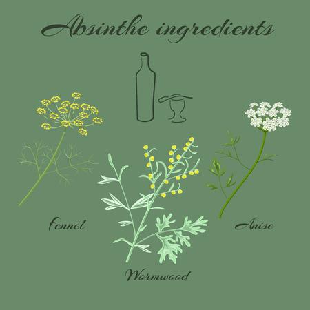 foeniculum vulgare: Absinthe ingredients. Grand wormwood or Artemisia absinthium ,  green anise or Pimpinella anisum, sweet fennel or Foeniculum vulgare. Vector illustration.