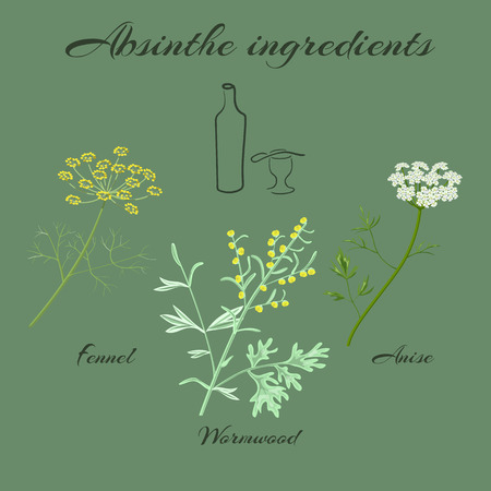 ajenjo: ingredientes absenta. Gran ajenjo o Artemisia absinthium, anís verde o Pimpinella anisum, hinojo dulce o Foeniculum vulgare. Ilustración del vector.