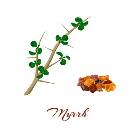 Myrrh tree. Leaves and resin. Commiphora myrrha. Vector illustration. Çizim