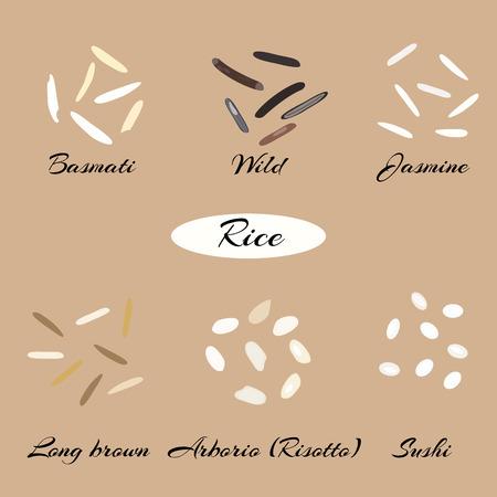 다른 유형의 쌀 Basmati, 야생, 재 스민, 긴 갈색, arborio, 초밥. 매크로.