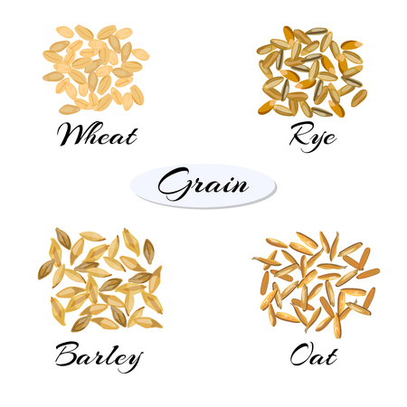 wheat grain: Cereal. Different types of grain - wheat, rye, barley, oats.