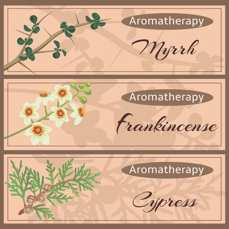 Aromatherapy set collection. Myhhr, frankincense, cypress banner set. Vettoriali