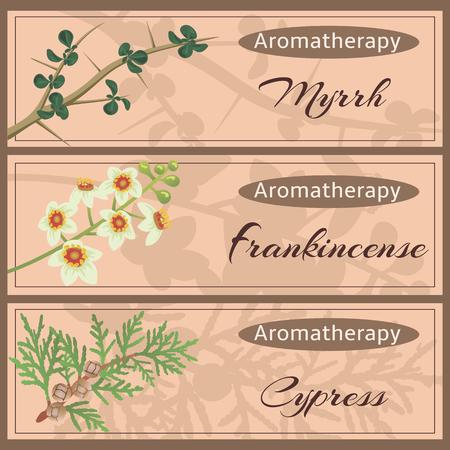 Aromatherapie set collectie. Myhhr, wierook, cipres banner instellen. Vector Illustratie
