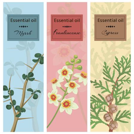 Essential oil set collection. Myrrh, frankincense, cypress banner set. Illustration