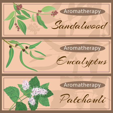 Aromatherapy set collection. Sandalwood, eucalyptus, patchouli banner set.