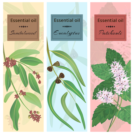 Essential oil set collection. Sandalwood, eucalyptus, patchouli banner set.