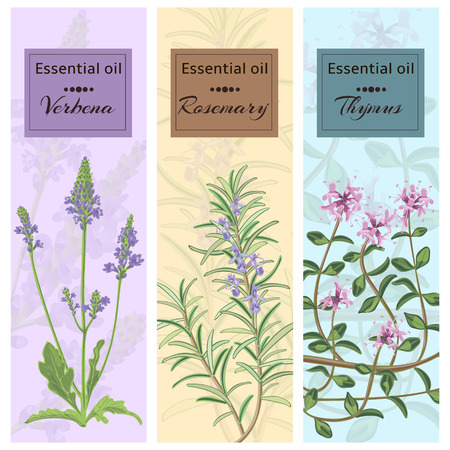 thymus: Essential oil set collection. Verbena, rosemary, thymus banner set.