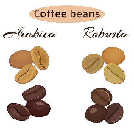 Arabica and robusta coffee beans. Green and roasted. Vector illustration. Illustration