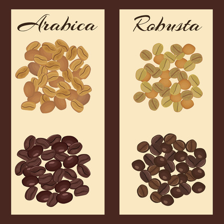 robusta: Arabica and robusta coffee beans. Green and roasted. Vector illustration. Illustration