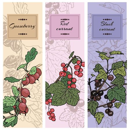 red currant: Set of berries. red currant, black currunt, gooseberry. Hand drawn vector illustration banners Illustration