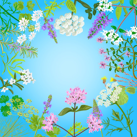 Vector card with herbal flowers. Salvia, angelica, oregano, rosemary, savory, verbena anise fennel coltsfoot marjoram flowers Vector illustration