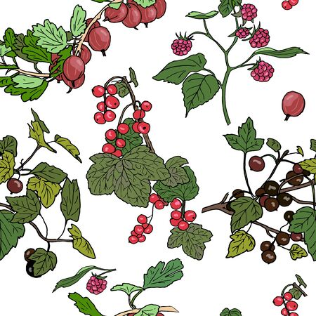 red currant: Seamles pattern different berries. red currant, black currunt, raspberry, gooseberry. Hand drawn vector illustration Illustration
