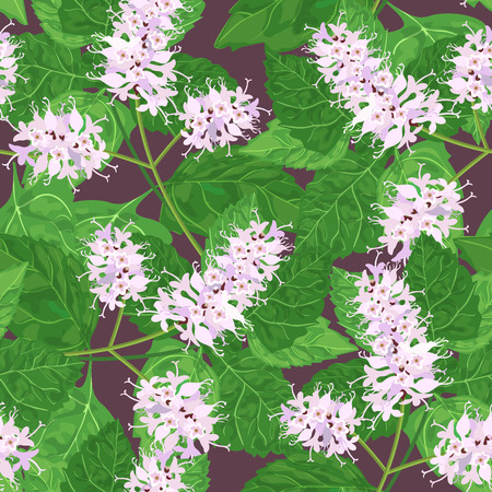 treatment plant: Seamless floral pattern with patchouli Pogostemon cablini . Vector illustration.