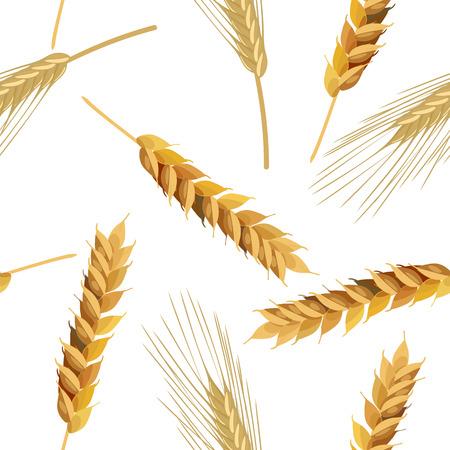 rye: Seamless pattern wheat and rye ears. Illustration