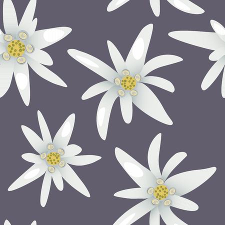 Edelweiss flowers.Seamless pattern Vector illustration