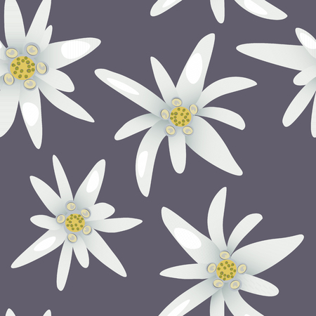 Edelweiss flowers.Seamless pattern Vector illustration