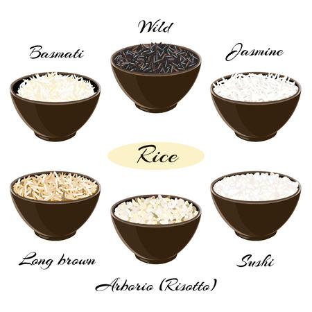 brown rice: Different types of rice Basmati, wild, jasmine, long brown, arborio, sushi in ceramic bowls Illustration